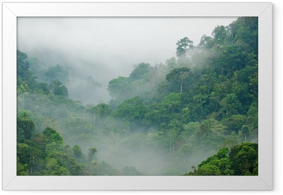Morning fog in the rainforest Framed Poster