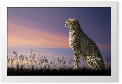 African safari concept image of cheetah looking out over savannn Framed Poster