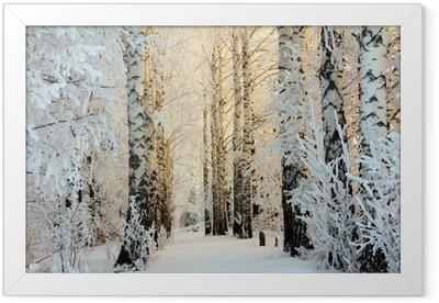 winter birch woods in morning light Framed Poster