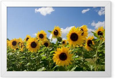 Sonnenblumen Framed Poster