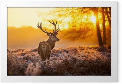 Red Deer in the morning sun Framed Poster