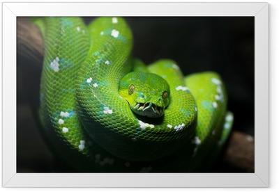 Green snake Framed Poster