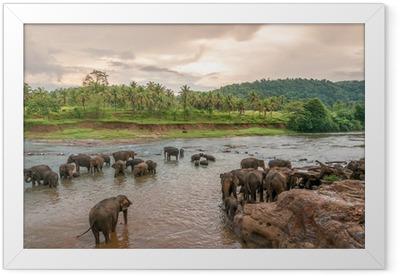 Swimmong Elephants Framed Poster
