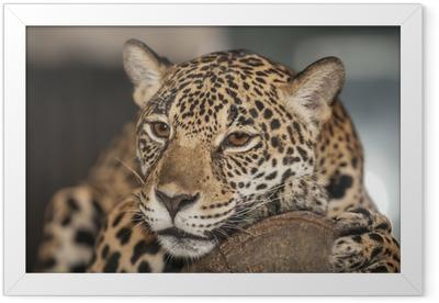 Portrait of leopard Framed Poster