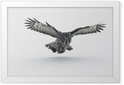 Great-grey owl, Strix nebulosa Framed Poster