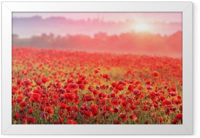 Red poppy field in the morning mist Framed Poster