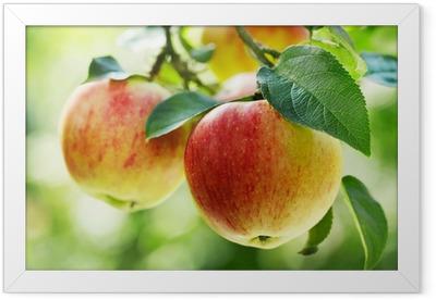 red apples Framed Poster
