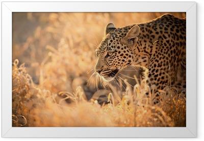 Leopard Walking at Sunset Framed Poster