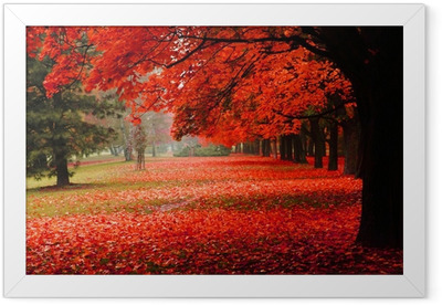 red autumn in the park Framed Poster