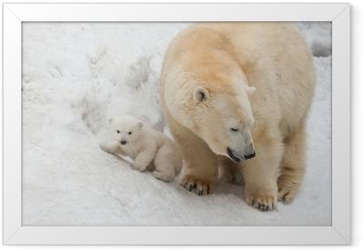 white bear Framed Poster
