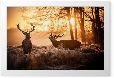 Red Deer in Morning Sun. Framed Poster