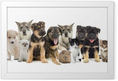 group of pets Framed Poster