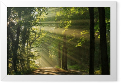 Sun rays shining through the forest Framed Poster