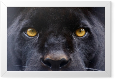the eyes of a black panther Framed Poster