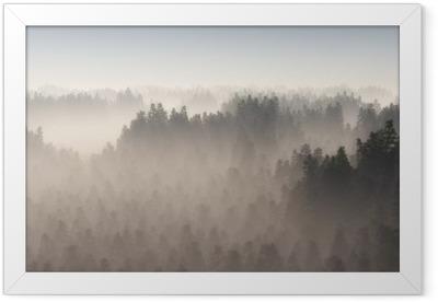 Dense pine forest in morning mist. Framed Poster
