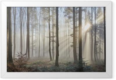 Sun rays through the foggy forest Framed Poster