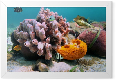 Sea sponges and tropical fish Framed Poster