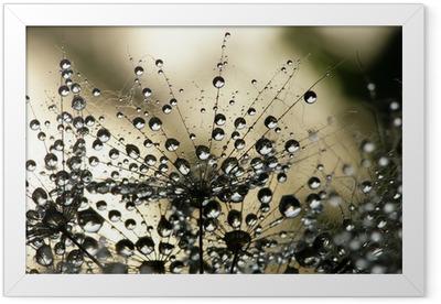 Wet dandelion seed Framed Poster