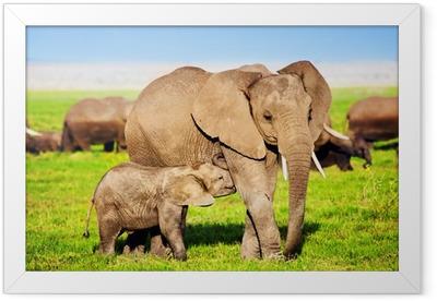 Elephants family on savanna. Safari in Amboseli, Kenya, Africa Framed Poster