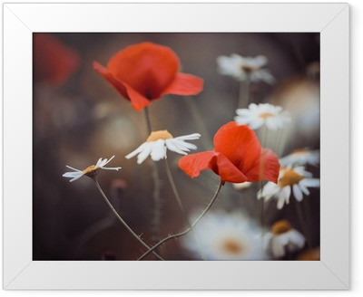 red poppy flowers and wild daisies Framed Poster