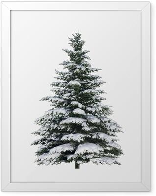 Tanne im Schnee Framed Poster