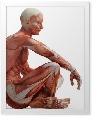 anatomy, muscles Framed Poster