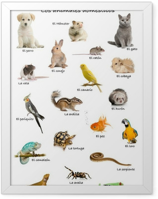 Collage of pets and animals in Spanish Framed Poster