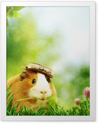 Funny guinea pig or cavia. Abstract natural backgrounds Framed Poster
