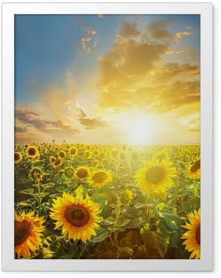 Summer landscape: beauty sunset over sunflowers field Framed Poster
