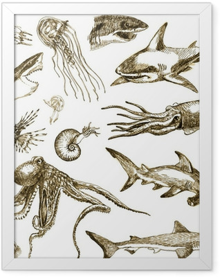 Hand-drawn collection. Marine life - SEA MONSTERS and Sharks. Framed Poster