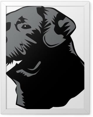labrador head Framed Poster