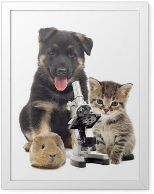 Puppy and microscope Framed Poster