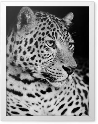 Leopard Framed Poster