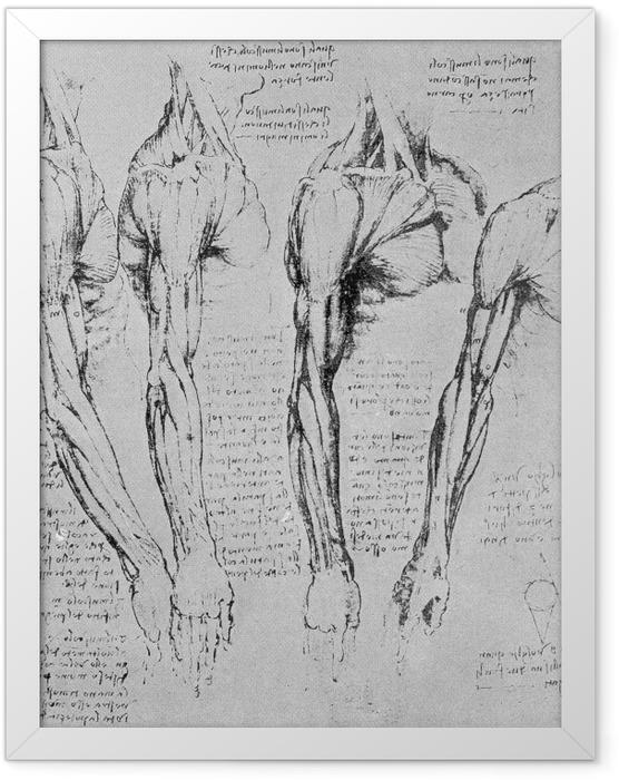 Gerahmtes Poster Leonardo da Vinci - Armstudie - Reproduktion