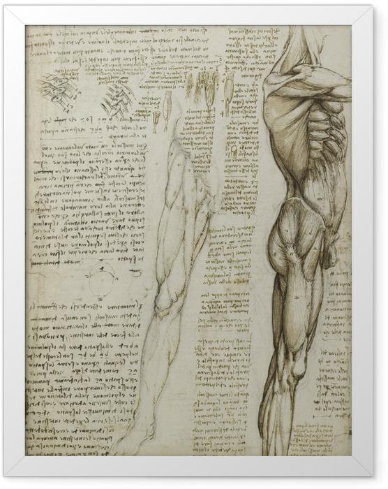Plakat w ramie Leonardo da Vinci - Studium anatomiczne - Reprodukcje