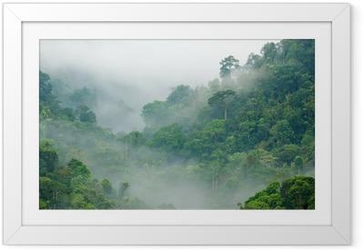 Póster Enmarcado Bosque niebla de la mañana