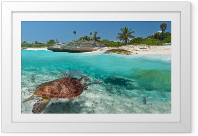 Caribbean Sea scenery with green turtle in Mexico Framed Poster