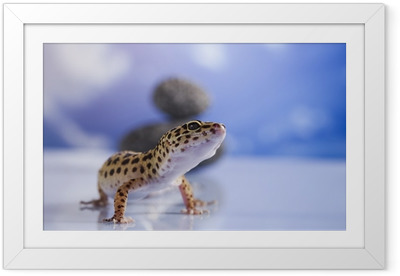 Small gecko reptile lizard Framed Poster
