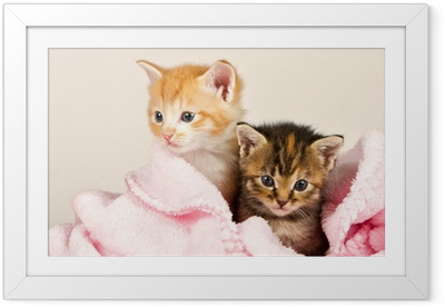 Plakat w ramie Dwa kociaki w różowym kocem