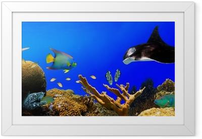Undervands tropisk rev panorama Indrammet plakat