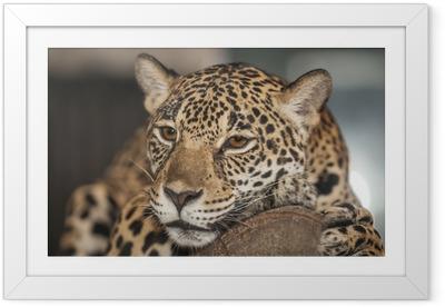 Gerahmtes Poster Portrait des Leoparden