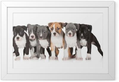 Poster en cadre Groupe de chiots ensemble - Mammifères