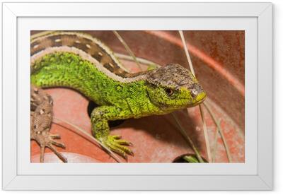 Lizard Framed Poster