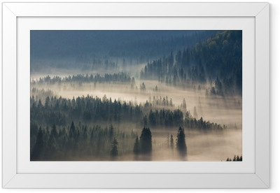 Poster en cadre Sapins sur une prairie en bas de la volonté de la forêt de conifères dans les montagnes brumeuses - Automne