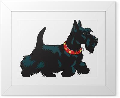 scottish terrier Framed Poster