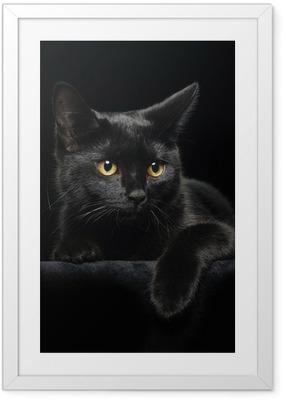Póster Enmarcado Gato negro con ojos amarillos