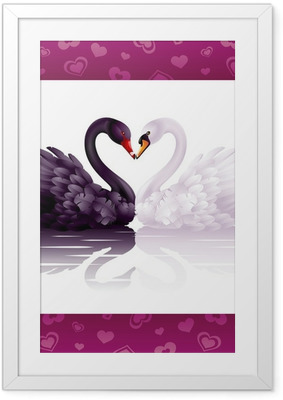 Póster Enmarcado Dos cisnes agraciados en amor: corazón blanco y negro