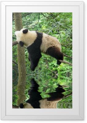 Ingelijste Poster Panda