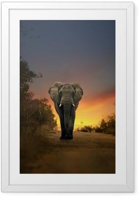 Poster in Cornice Elefante africano a piedi nel tramonto