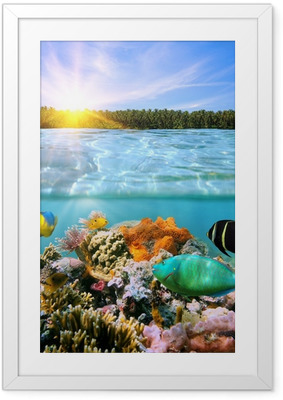Innrammet plakat Solnedgang og fargerikt undervanns marine liv